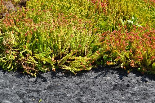 vegetačný koberec na hydrofilnej doske